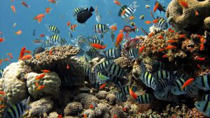 2013-09-15-135104_underwater-coral-reef-fish-bubbles-nature