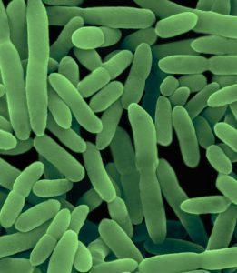 nitrobacter-500x500