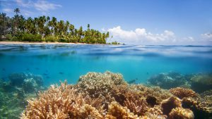 002800-11-coral-reef-view-from-water
